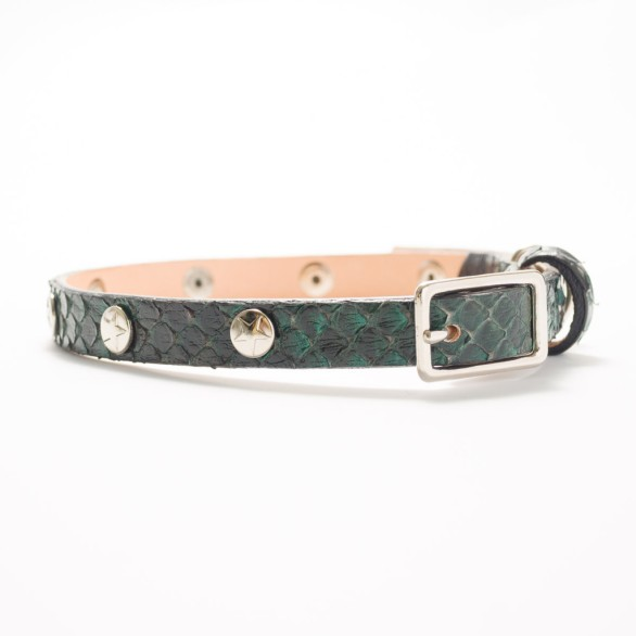 Star Power Python Dog Collar RareBreed