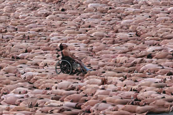 Spencer Tunick standing out in a crowd.