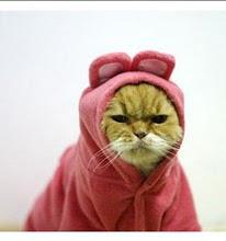 not happy kitty