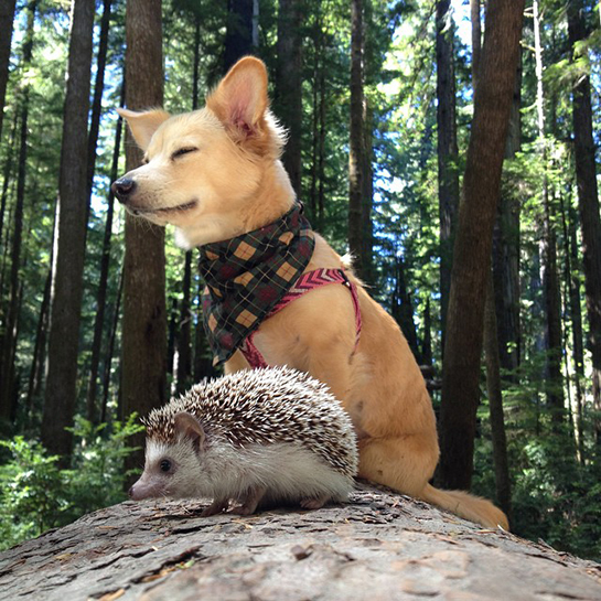 Biddy the Hedgehog and Friend Zen Moment