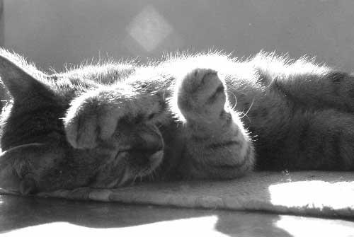 cat-lying-in-sun
