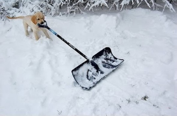 Greg Cox of Guelph, Canada, tweeted that Elsa was the dog