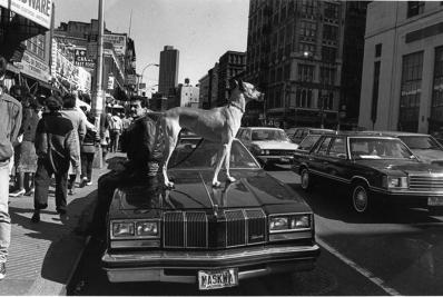 Len Speier Dog on Car, Canal Street, 1979