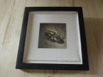 Hallmarked Insect Photograph shophousingworks