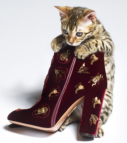 Kitty in boots (2)