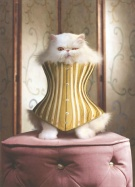 cat-in-corset