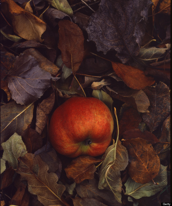 fallen apple Photo by Susie Cushner on Getty Images