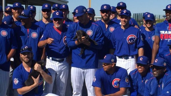 cubs_holding_cubs-2016