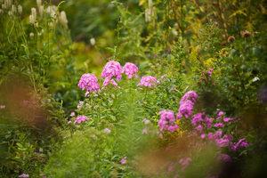 blooming-summer-flowers-shakespeare-garden