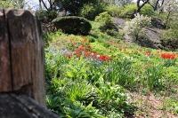 shakespeare-garden-rocks spring