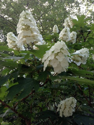 Shakespeare's Garden central park blooms