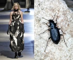 Giles and Boreal mud-loving beetle Victor Virgile Gamma-Rapho via Getty