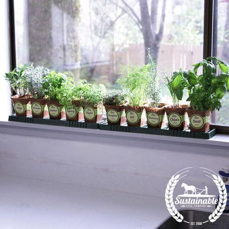 windowsill-herb-garden-kit-supportive-wm_470x509
